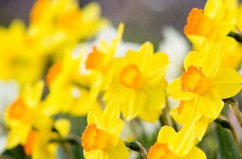 Laura's gardening column April 09