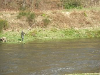 River Tweed catch